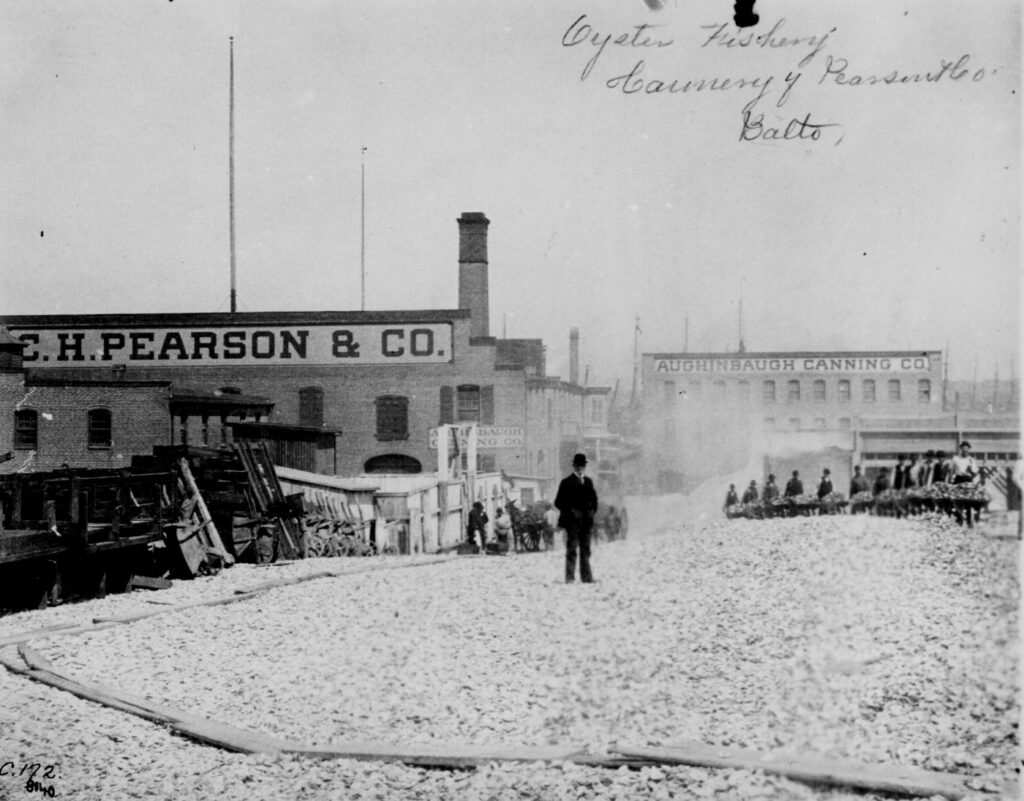 Man with a derby hat stands atop a mound of oyster shells outside the C. H. Pearson & Company oyster cannery, Baltimore. Workers bring wheel- barrows of shells from the factory to the heap. ca. 1890.